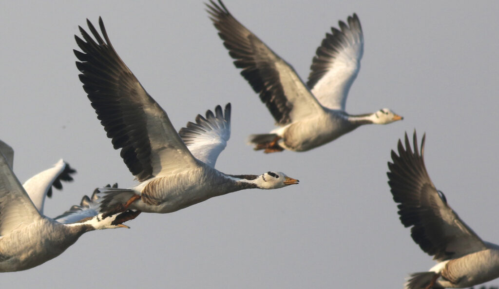 Vögel im Flug fotografieren-01