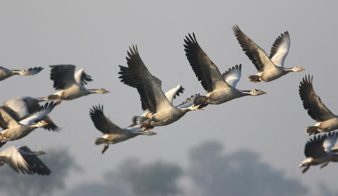 Vögel im Flug fotografieren-Cover