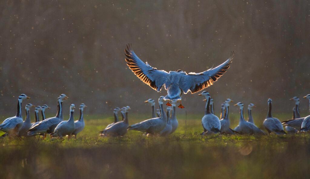 Vögel im Flug fotografieren-02
