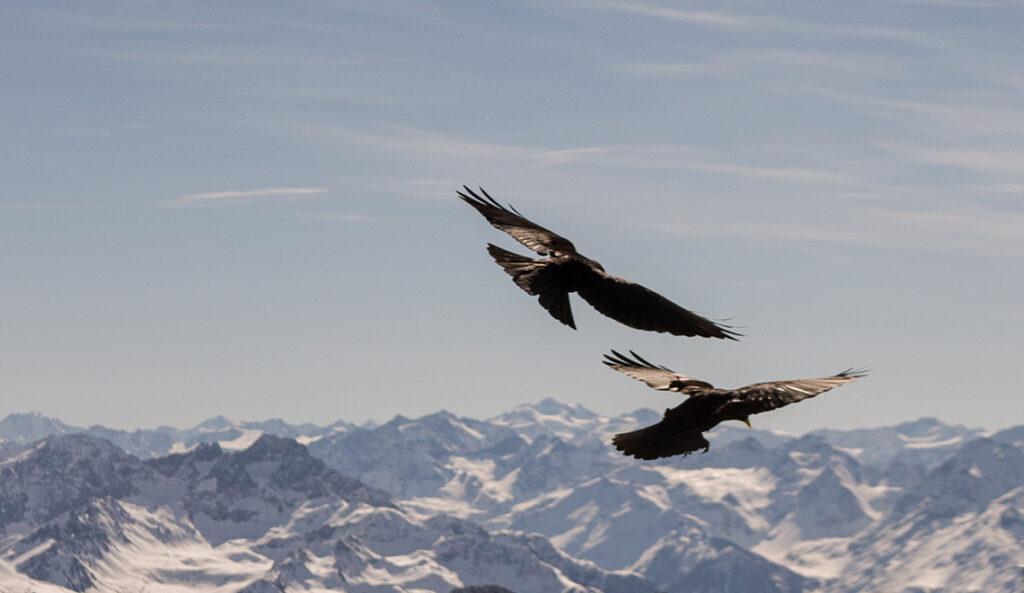 Vögel im Flug fotografieren-03
