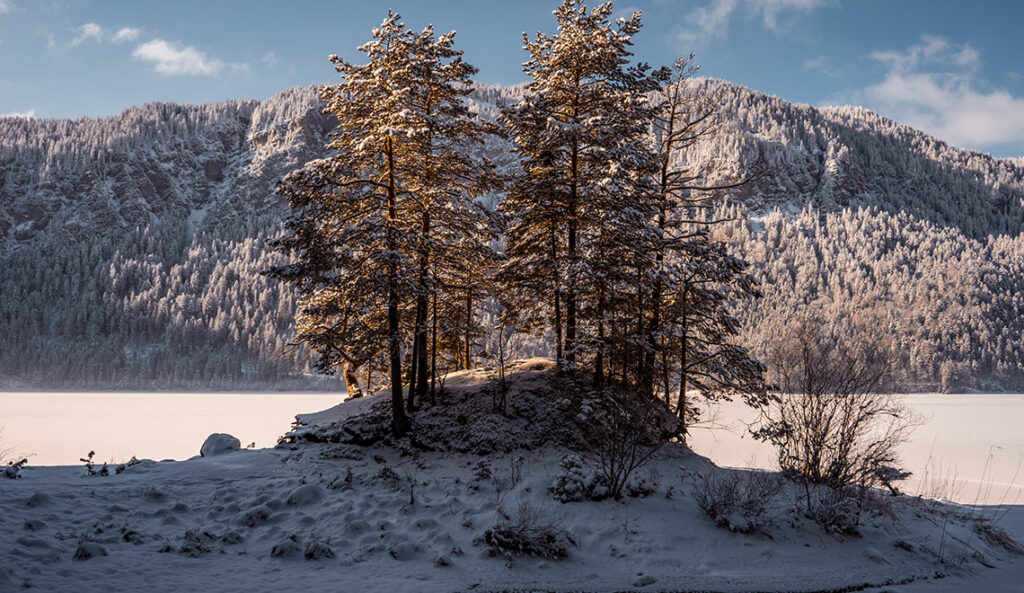 Eibsee im Winter Bäume